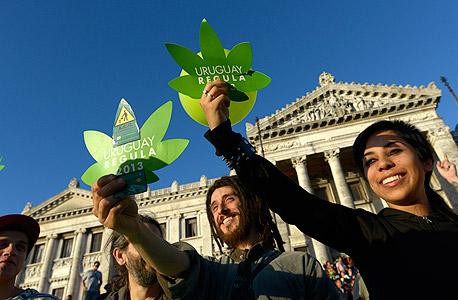 אורוגוואי: מותר לגדל מריחואנה ולסחור בה