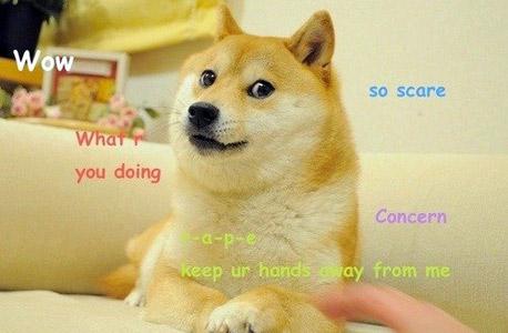 המם Doge, על בסיסו נוצר המטבע