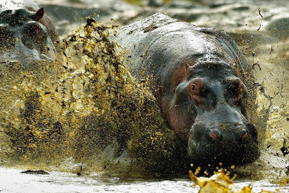 צילום:  Vittorio Ricci ,the nature Conservancy