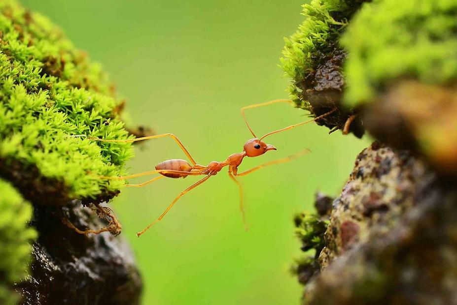 צילום:  Alland Dharmawan ,the nature Conservancy