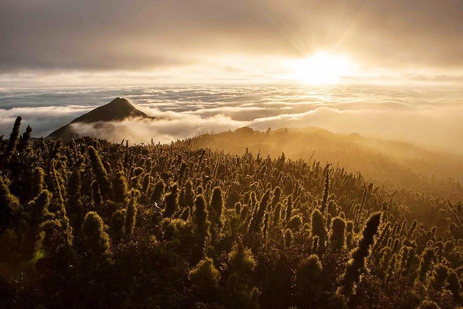 צילום:  Lucas Pontes ,the nature Conservancy