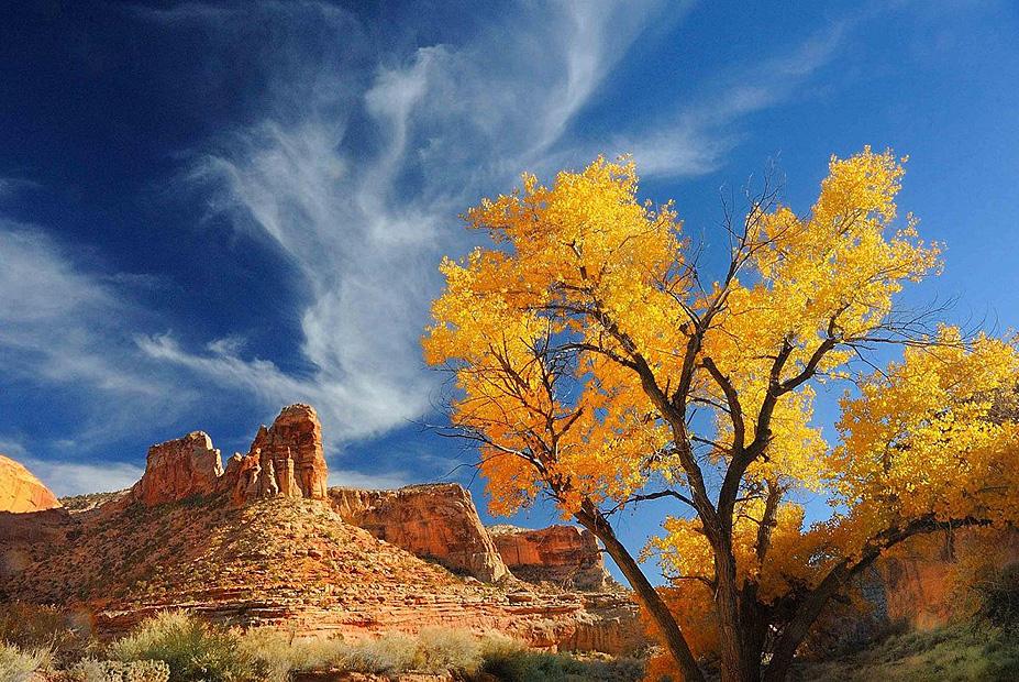 צילום:  Leslie Scopes Anderson ,the nature Conservancy