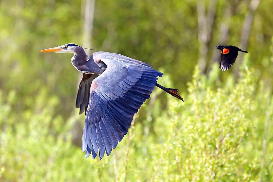 צילום:  Tulus Simatupang ,the nature Conservancy