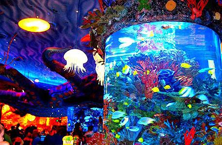 צפו: אקווריום ענק מתבקע בבית קפה בדיסני באורלנדו
