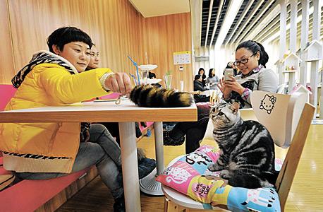 בית קפה לחתולים בנאנג