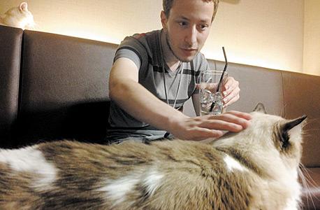 """כתב """"מוסף כלכליסט"""" בקפה חתולים בטוקיו"""