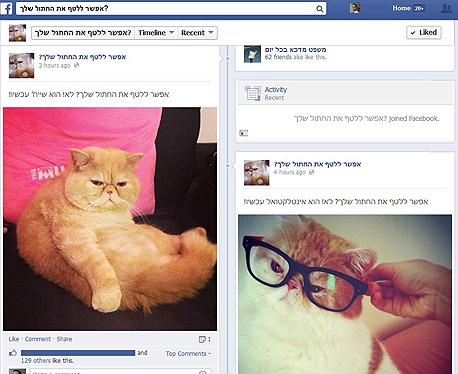 חתולים פייסבוק קבוצות