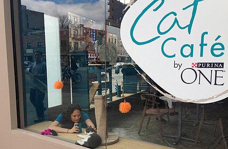 לקוחה מצלמת את אחד החתולים באייפון, צילום: אם סי טי