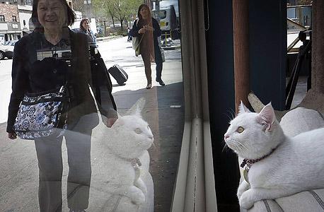 בית קפה לחתולים. נראה גם שהחתולים נהנים מתשומת הלב, צילום: רויטרס