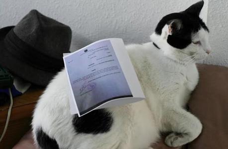 בתמונה: חתול תחת צו איסור פרסום. יעיל באותה המידה