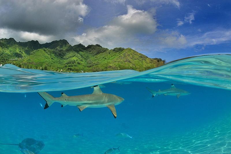 כרישים שוחים סמוך לחופי פולינזיה הצרפתית. התצלום מציג חלוקה שווה בין הים והשמים
