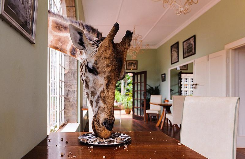 אל תשאירו אוכל בחוץ, אלא אם כן לא אכפת לכם שכמה אורחים רעבים יבואו לביקור: הג