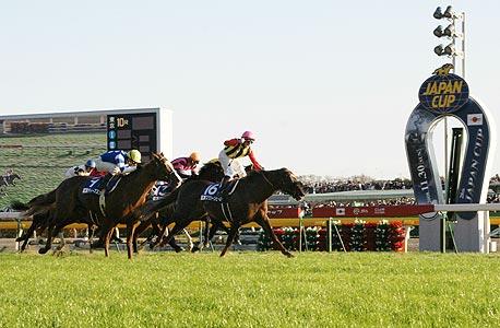 מרוצי הסוסים ביפן מהמרים על שייחים מדובאי ועל לויד-וובר