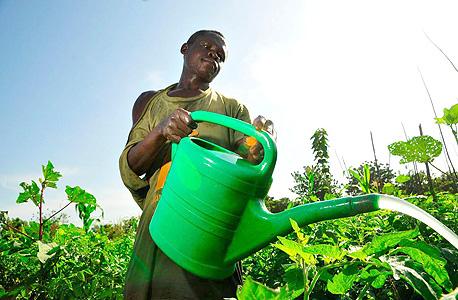 """חקלאי במטע בגאנה. תמ""""ג בצמיחה מרשימה, שיעור עוני גבוה, צילום: בלומברג"""
