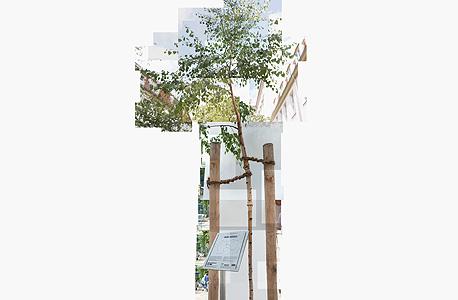 עץ שדר (Birch) שנלקח מאזור מחנה ההשמדה אושוויץ והוצב בברלין. אזולאי הזמינה מומחה לצמחים, וזה קבע שזיכרון הזרע של העץ מושפע מהאזור שממנו נלקח, ושהוא מתקשה להצמיח שורשים איתנים