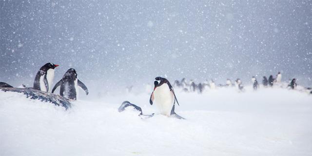 תופעה נדירה - שלג באנטרקטיקה, צילום:Anne Dirkse/yourshot.nationalgeographic.com