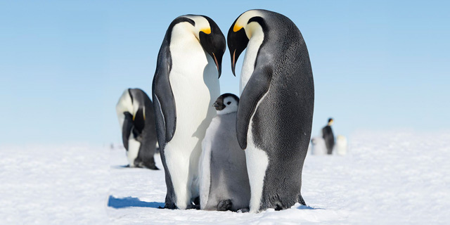 ממלכת הפינגווינים: 10 עובדות מדהימות על אנטרקטיקה