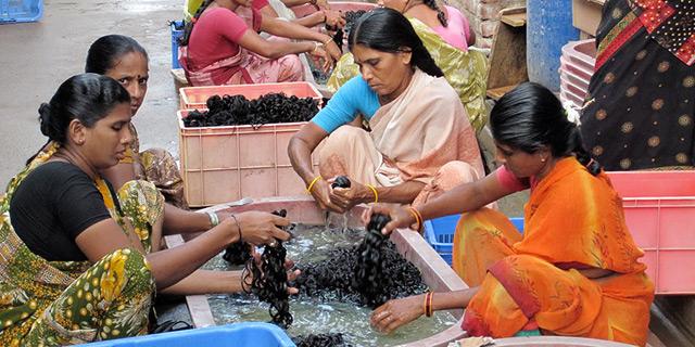 טיפול בשיער שנתרם, צילום: sunnyshair.com