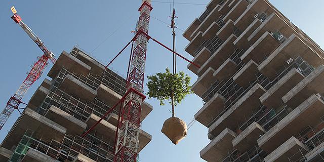 """""""שותלים את היער"""", צילום: Barreca & La Varra"""