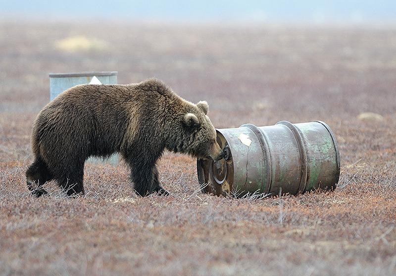 """""""חפש תמיד רק את הטוב, שבאמת נחוץ לדוב, ושכח את הצרות שבחיים"""", ספר הג'ונגל"""