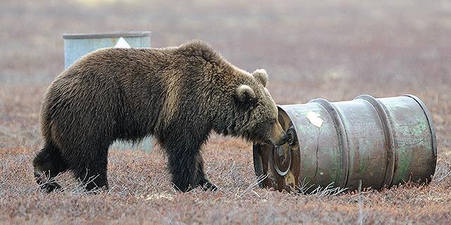 """""""חפש תמיד רק את הטוב, שבאמת נחוץ לדוב, ושכח את הצרות שבחיים"""", ספר הג"""