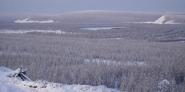 יער טייגה. סיביר, צילום:   Wikimedia