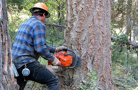 חוטב עצים, פחות נייר מצריך פחות עצים, צילום: shutterstock