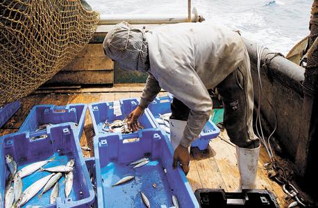 ספינת דיג ביפו. הדייגים מוציאים כמות גדולה מזו שהים מייצר