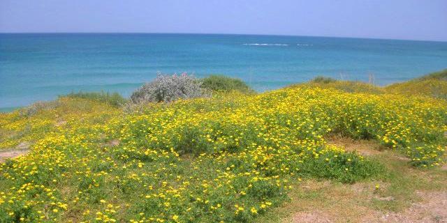 הקרב על חוף פלמחים מגיע לקיצו: המחוזית תכריע מחר האם כפר הנופש יבוטל