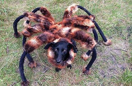 יוטיוב קליפים 2014 עכביש