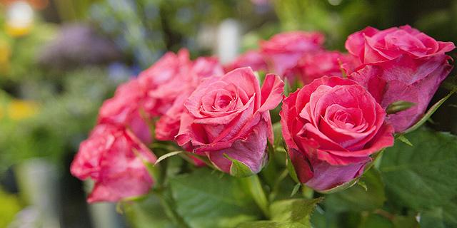 """מדענים בשבדיה פיתחו """"ורדים סייבורגים"""""""