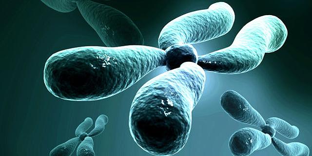 הדמיה של כרומוזום מלאכותי, צילום: io9.com