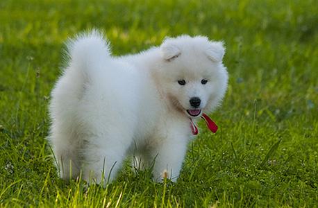 Dog (illustration). Photo: Shutterstock