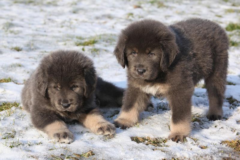 הגדול הכלב הוא חברו הטוב של האדם, אבל כמה הוא עולה? VQ-04