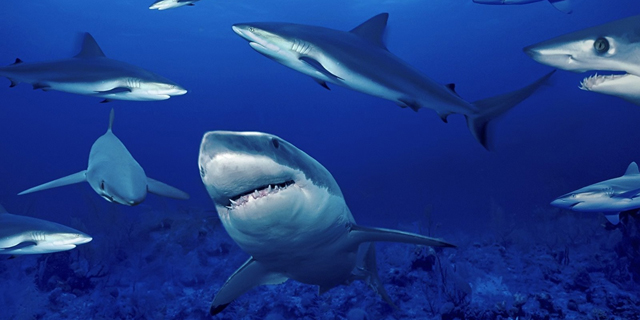 Of Sharks and Nuclear Power Plants