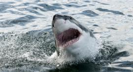 Shark (illustration). Photo: Shutterstock