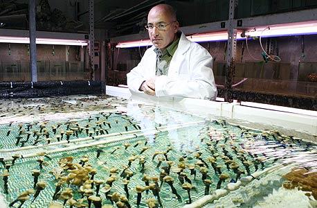 גיא פז ואלמוגים במעבדה