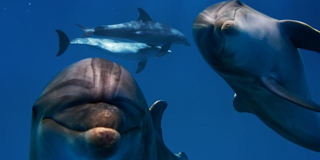 איך דולפינים ישנים בלי לטבוע?