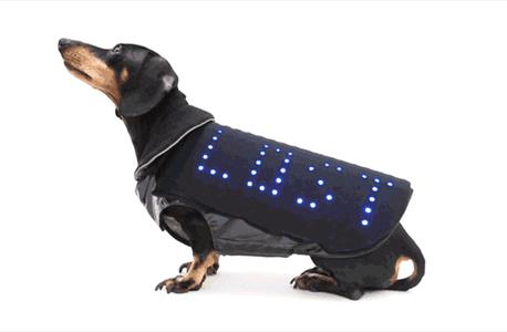 כלב המסיבה