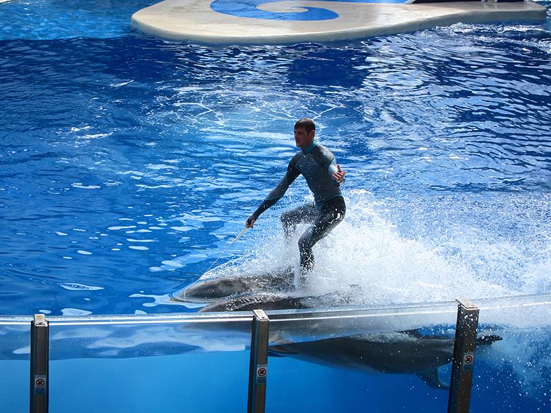 """גלישה על דולפינים ב""""סיוורלד"""" שבאורלנדו, פלורידה, צילום: Flickr / Joe Shlabotnik"""