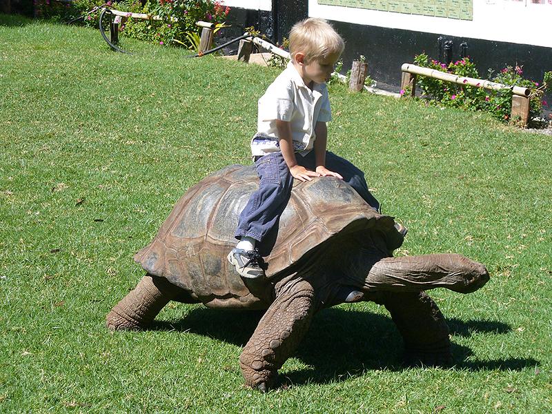 ילד צעיר רוכב על צב. היעזרו בסבלנות, צילום: ויקיפדיה