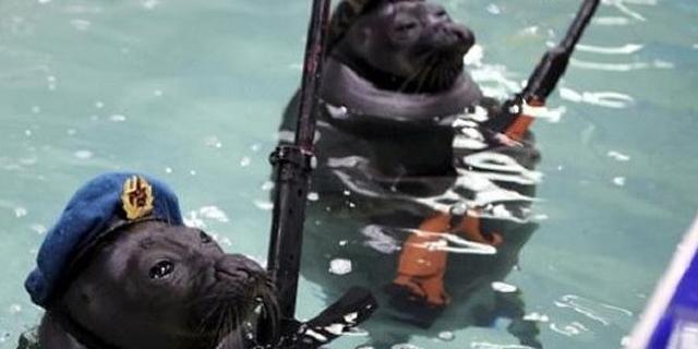 מסדר הניצחון של מלחמת כלבי הים