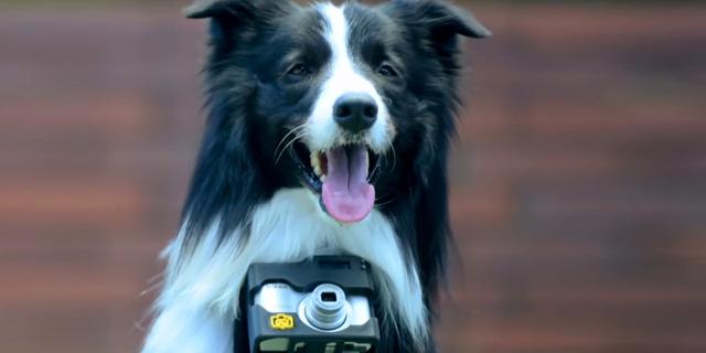 הכלב מצלם. השאלה היא מה ייגמר קודם – מקום האחסון בזיכרון של המצלמה או האנרגיה של הכלב?