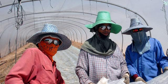 החקלאים יוכלו לקזז עוד 250 שקל משכרם של עובדים זרים