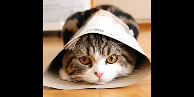 החתול לא סנוב, הוא פשוט דואג לך