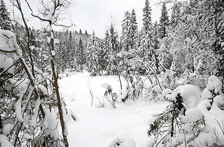 היער הנורבגי שבו נשתלו אלף העצים, צילום:Katie Paterson