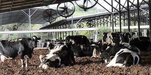 לוקר הציע: מחירי מוצרי החלב יורדו באופן מיידי בשיעור של 5%