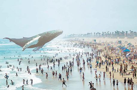 לווייתן מרחף באתר מג