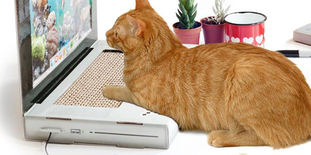 גם לחתול שלכם מגיע לפטופ משלו!