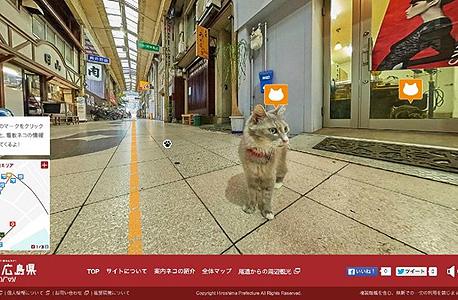 הירושימה גוגל דטריט וויו חתולים, צילום: Hiroshima prefecture